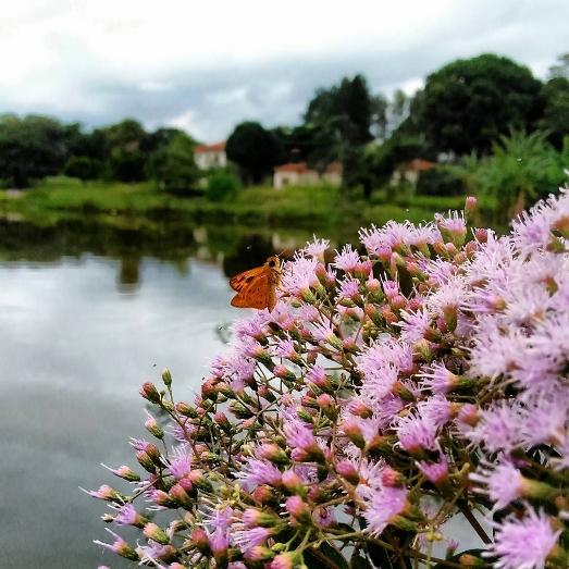 Foto: Flores da Baixada
